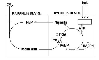 Biyokimya (2.bölüm)