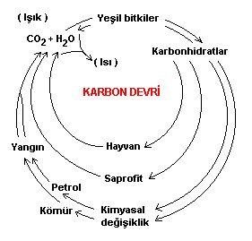 Ekolojik dengeler ve �evre